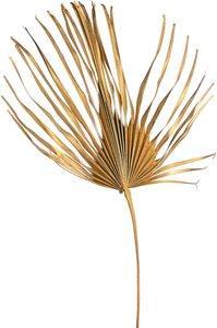 Palmenblätter XXL ca.78cm, gold